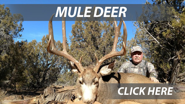 Mule Deer hunts in Arizona